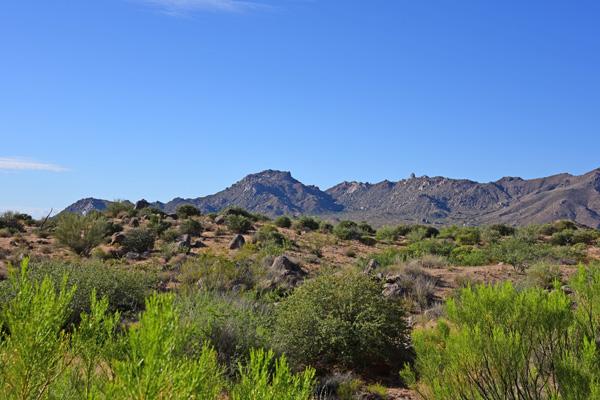 Goldie Brown Pinnacle Peak Ranch