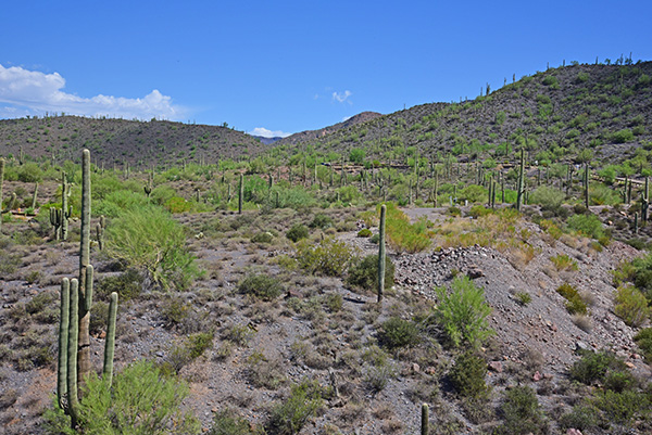 Continential Mountain Estates Lot 4