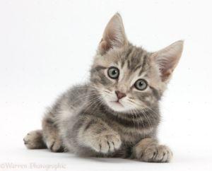 Kitten Pop-Up Adoption Shop | June 22-23, 2019