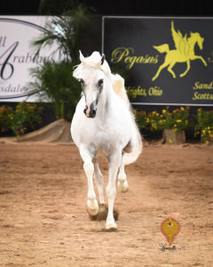 Arabian National Breeder Finals | September 25-28, 2019